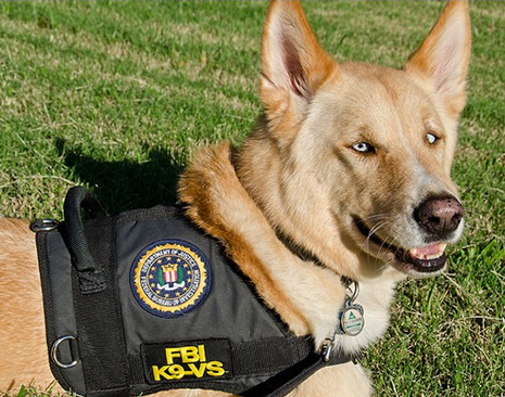 The Fbi S First Therapy Dog Animal Health Foundation Blog