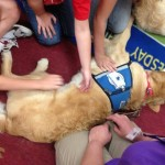 Texas Therapy Dogs
