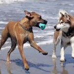 HB dog beach