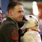 dog and marine