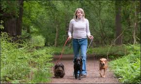 person walking with dogs