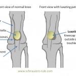 luxating-patella-dog-knee