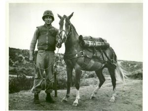 Korean War Horse
