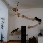 cat-playground